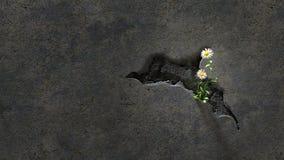 Blumen in einer gebrochenen Wand Stockfoto