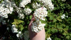 Blumen in einer Hand lizenzfreie stockfotografie