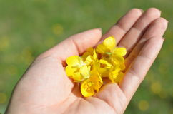 Blumen in einer Hand Stockfotos