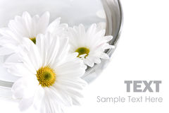 Blumen in einer Schüssel lizenzfreie abbildung