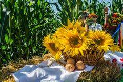 Blumen einer Sonnenblume in einem Korb, auf einem Strohballen, gegen einen Hintergrund eines Feldes von Mais lizenzfreie stockfotografie