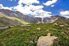 Blumen in einer Wiese mit einem Berg im Hintergrund lizenzfreie stockfotos