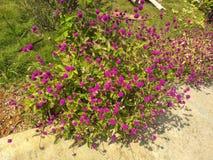 Blumen eines schönen Gartens lizenzfreie stockfotos