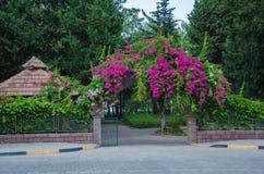 Blumen am Eingang zum Park, blühender Zaun, rosa Blumen stockbilder
