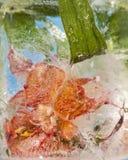 Blumen eingefroren im Eis Stockbild