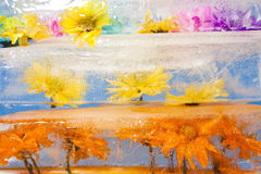 Blumen eingefroren im Eis-Block Stockfotos