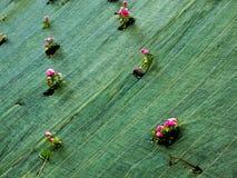 Blumen eingeschlossen in einer Plane Lizenzfreie Stockfotos