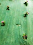 Blumen eingeschlossen in einer Plane Lizenzfreies Stockfoto
