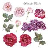 Blumen eingestellt von den Aquarellrosen und -flieder Stockfotografie