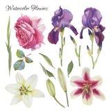Blumen eingestellt von Hand gezeichneten Aquarelllilien, -iris, -rose und -blättern Stockbilder