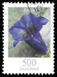 Blumen-Enzian ohne Stiel Lizenzfreies Stockfoto