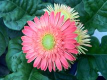 Blumen-@ Erdbeerpark lizenzfreies stockbild