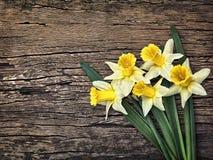 Blumen färben Narzissen auf einem hölzernen Weinlesehintergrund gelb Stockfoto