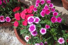 Blumen für den Hintergrund schön lizenzfreie stockfotografie
