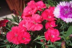 Blumen für den Hintergrund schön Lizenzfreie Stockbilder