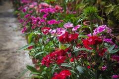 Blumen für den Hintergrund schön stockbild