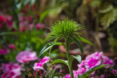 Blumen für den Hintergrund schön lizenzfreie stockfotos