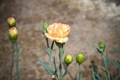 Blumen für den Hintergrund schön Stockfotos