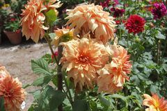Blumen für den Hintergrund schön stockfotografie