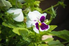 Blumen für den Hintergrund schön Lizenzfreies Stockfoto