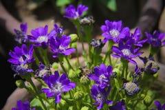 Blumen für den Hintergrund schön lizenzfreies stockbild