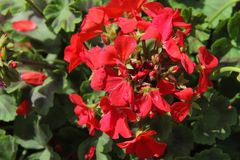 Blumen für den Hintergrund schön Stockfoto