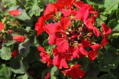 Blumen für den Hintergrund schön Stockbilder