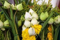 Blumen für die Anbetung von Buddha-Lotosspezies Stockfoto