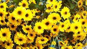 Blumen für die Landschaftsgestaltung Lizenzfreie Stockfotos