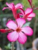 Blumen für Hintergrund Lizenzfreies Stockbild
