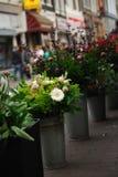 Blumen für Verkauf in Amsterdam Stockfotos