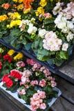 Blumen für Verkauf in der Kindertagesstätte Stockbild