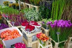 Blumen für Verkauf an einem niederländischen Blumenmarkt, Amsterdam, die Niederlande, am 12. Oktober 2017 lizenzfreie stockfotos