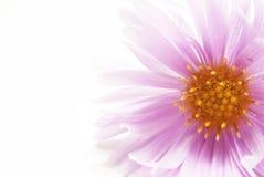 Blumen-Farbe Stockbild
