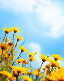Blumen fassen über Himmel ein Stockbild