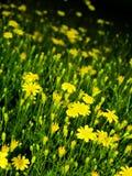 Blumen-Feld 04 Stockfotos