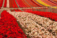 Blumen-Feld Lizenzfreie Stockfotos