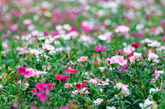 Blumen-Feld Stockfoto