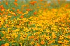 Blumen-Feld Stockfotos