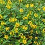 Blumen-Feld Stockbild