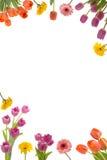 Blumen-Feld Lizenzfreies Stockbild