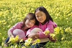 Blumen-Feld Stockbilder