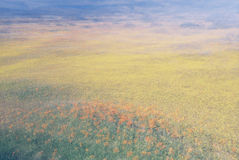 Blumen-Feld-Auszug Stockfotografie