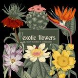 Blumen Feld blühende Rosen der Skizze auf einem purpurroten Hintergrund mit Streifen tropisch Gemüsemuster Botanisches Thema Lizenzfreies Stockfoto