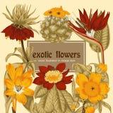Blumen Feld blühende Rosen der Skizze auf einem purpurroten Hintergrund mit Streifen tropisch Gemüsemuster Botanisches Thema Lizenzfreie Stockfotos