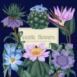 Blumen Feld blühende Rosen der Skizze auf einem purpurroten Hintergrund mit Streifen tropisch Gemüsemuster Botanisches Thema Stockfoto