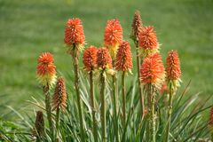 Blumen-Feld-Hintergrund lizenzfreie stockfotografie