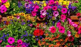 Blumen-Feld-Hintergrund stockfotografie