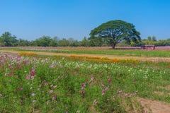 Blumen-Feld und großer Baum stockfoto