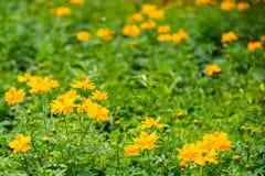 Blumen-Felder Lizenzfreie Stockfotos